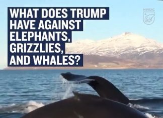 Leonardo DiCaprio Instagram:    We don't remember anyone voting to kill elephants, bears, and whales in the 2...