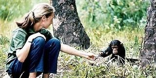 Leonardo DiCaprio Instagram: Today's chimpanzee is constantly threatened by the dangers of poaching, habitat ...