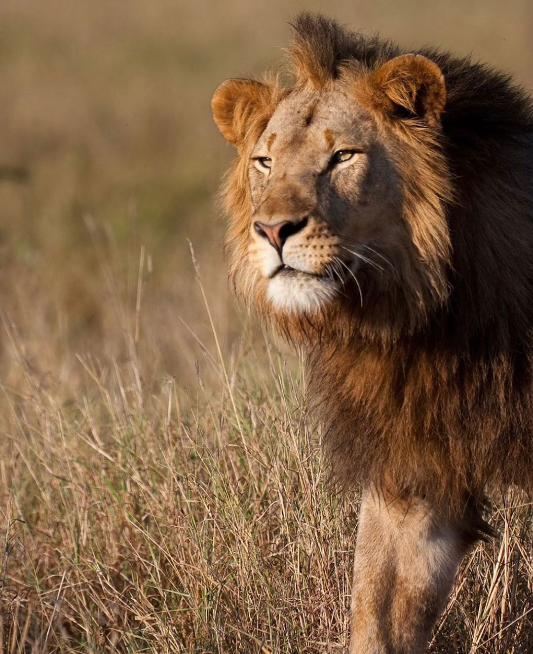 Leonardo DiCaprio Instagram:    The Makame Wildlife Management Area in northern Tanzania is rich with the Maa...