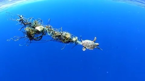 Leonardo DiCaprio Instagram:     A young sea turtle drags a tangle of fishing nets and other debris through t...