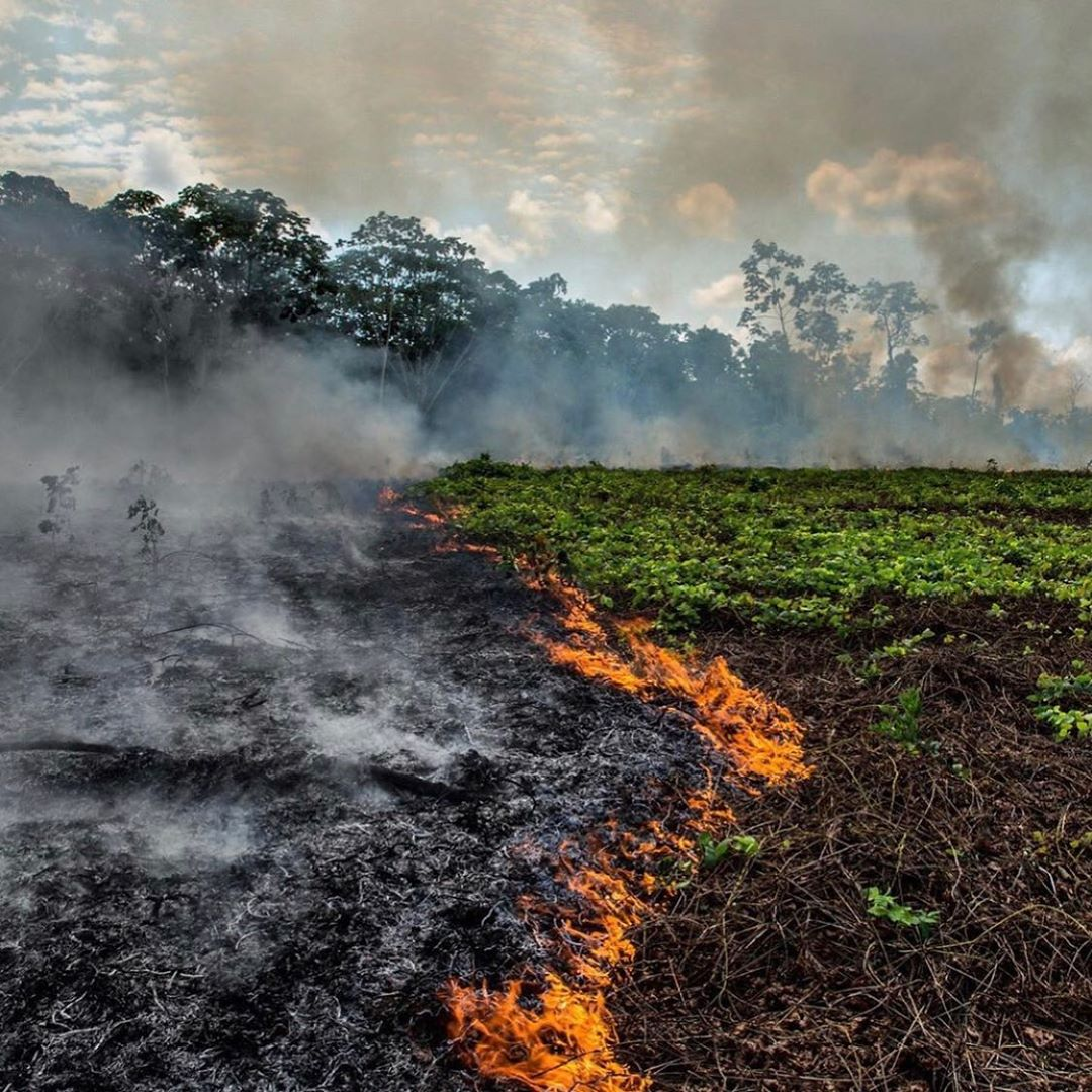 Leonardo DiCaprio Instagram:     The lungs of the Earth are in flames.  The Brazilian Amazon—home to 1 millio...