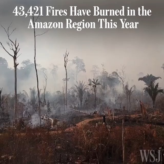 Leonardo DiCaprio Instagram:    The number of fires in the Amazon region this year is more than double the 19...