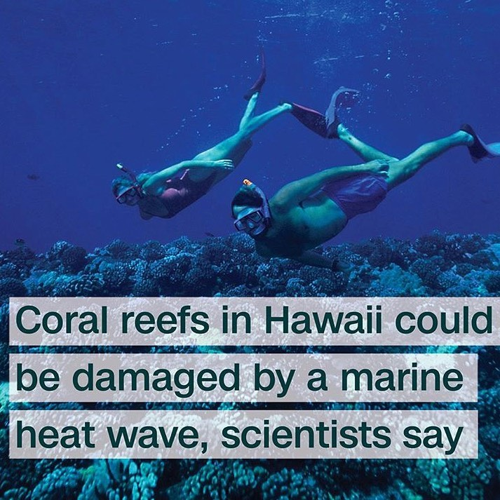 Leonardo DiCaprio Instagram:    A major marine heat wave in the Pacific could spell disaster for the coral re...