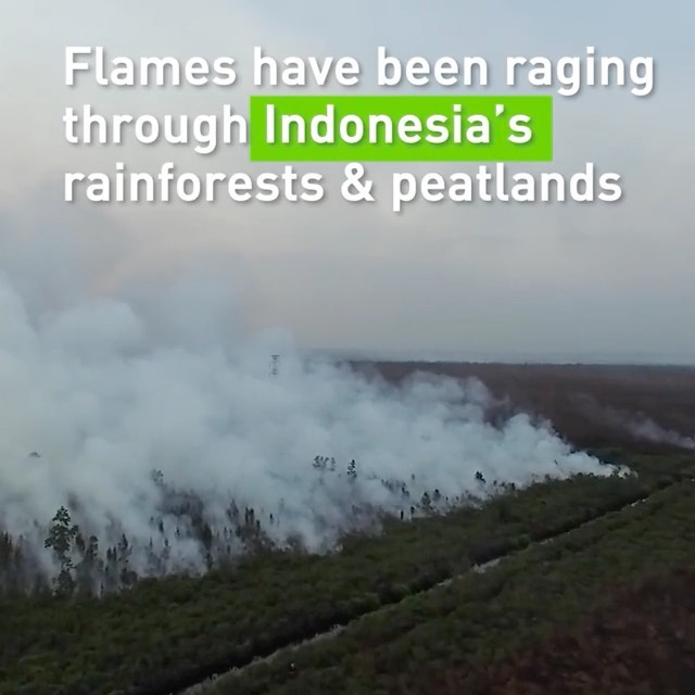Leonardo DiCaprio Instagram:    Fires have been ravaging Indonesia's forests for months, causing severe respi...