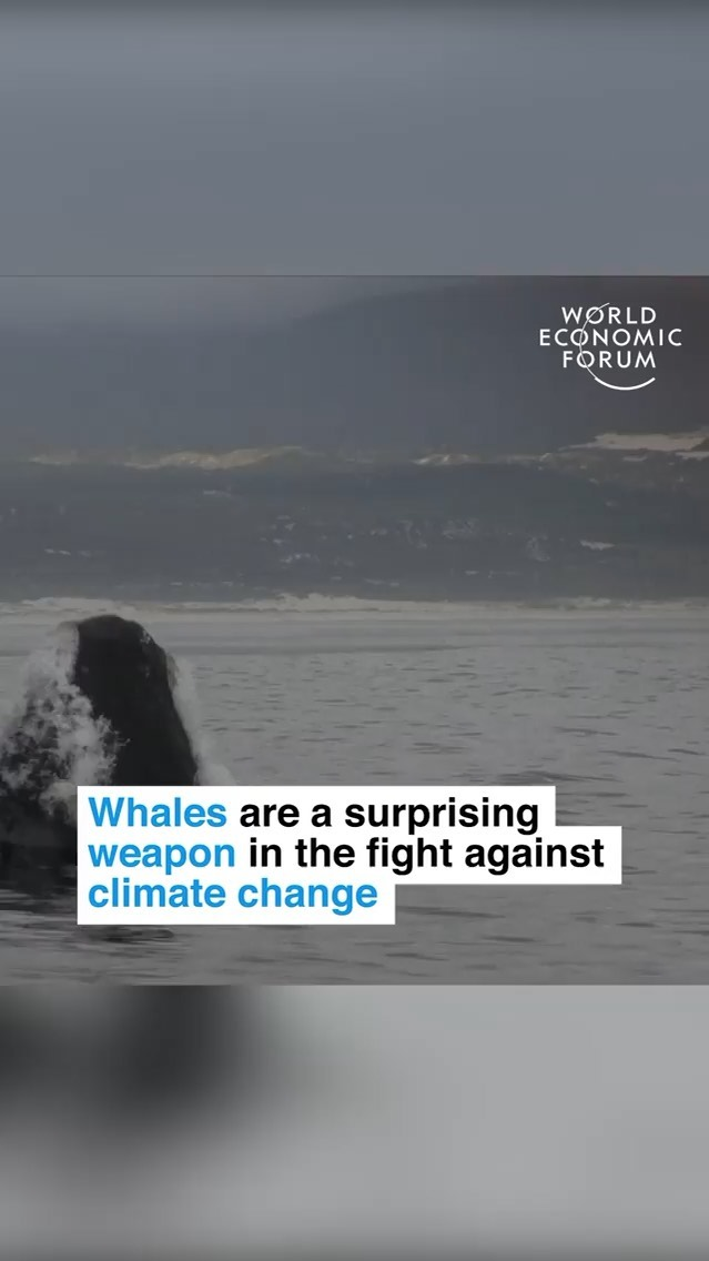 Leonardo DiCaprio Instagram: Repost IGTV from  Whales are a surprising weapon in the fight against climate ch...