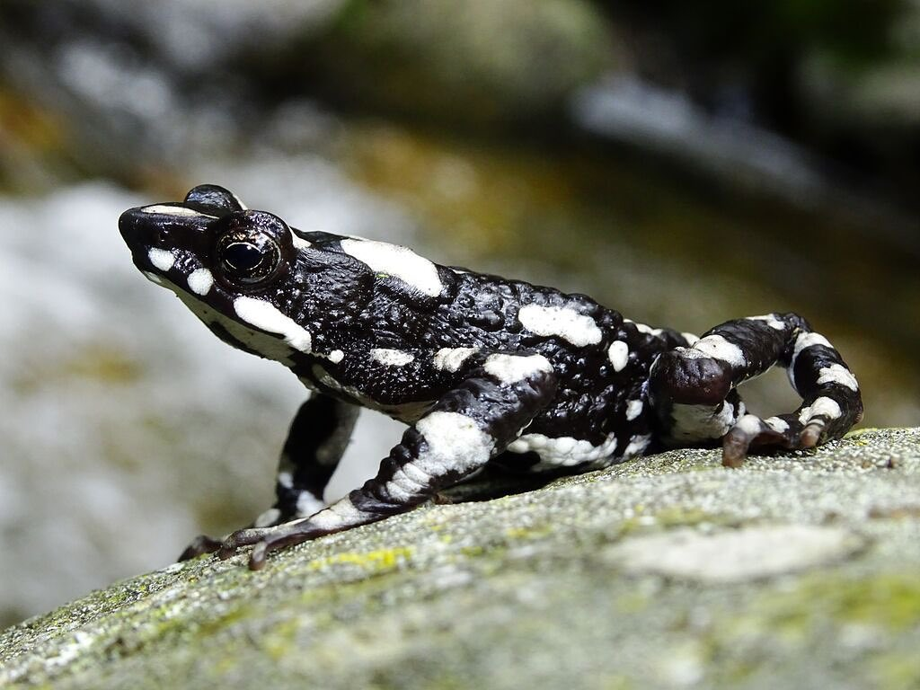 Leonardo DiCaprio Instagram:    Today's news about the 'rediscovery' of the Starry Night Harlequin Toad is a ...