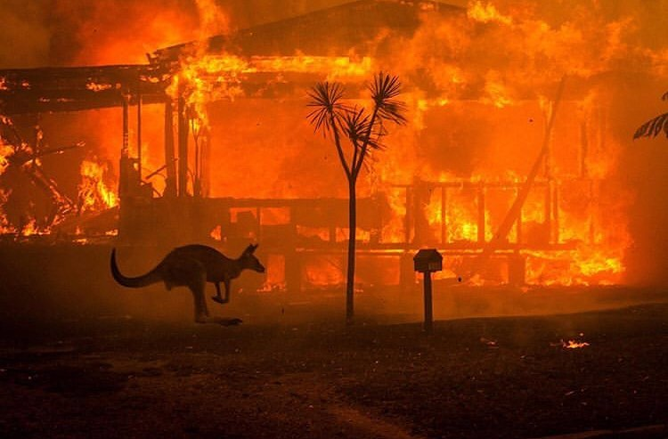 Leonardo DiCaprio Instagram:    Australia is on fire. And the summer there has only just begun. 2019 was a ye...