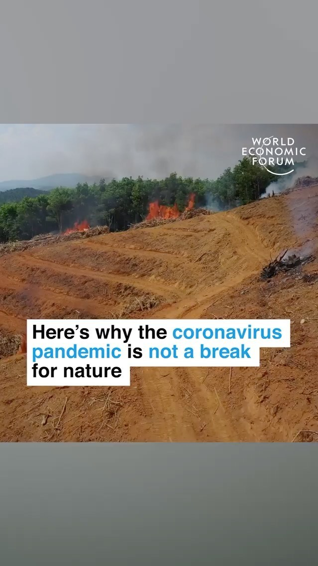 Leonardo DiCaprio Instagram: Here's why the coronavirus pandemic is not a break for nature. Outside urban are...